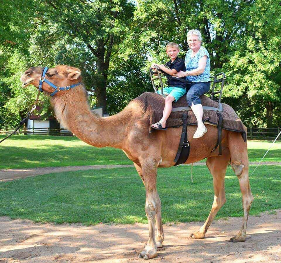 Camel riding at the St. Louis Zoo Fun things to do with kids in St. Louis, MO