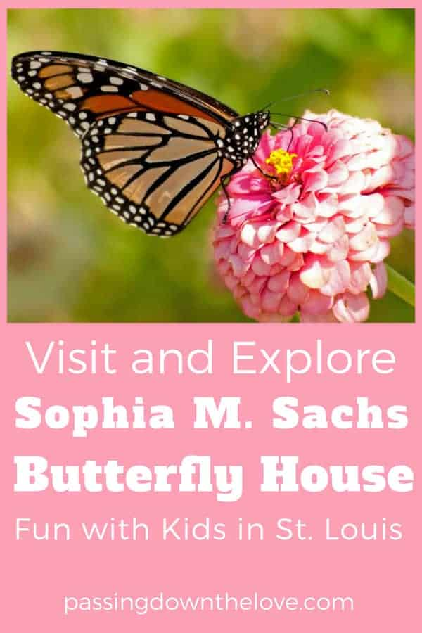 Sachs Butterfly House.  Kid Friendly Fun in St. Louis, MO.  Here are some fun things to do with kids in St. Louis, MO.