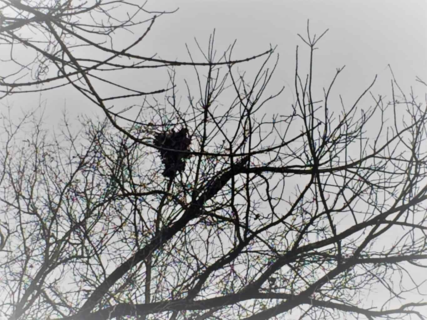 Passing down the love of nature: birds nest in winter tree