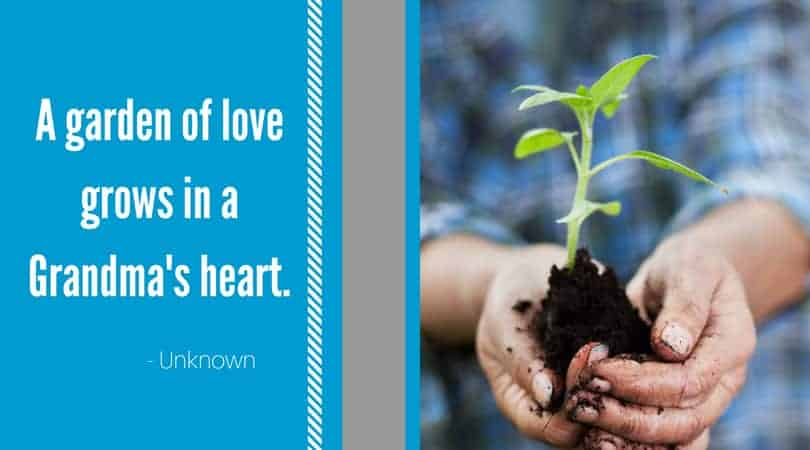 Grandmas garden of love