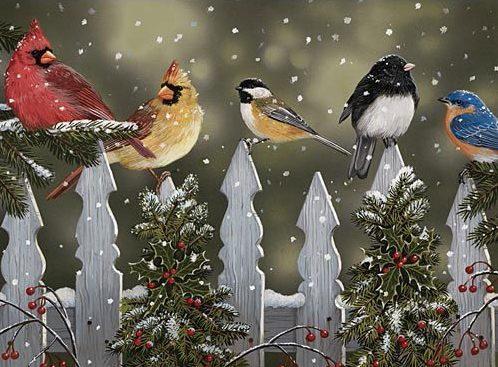 Nature Bird Puzzle